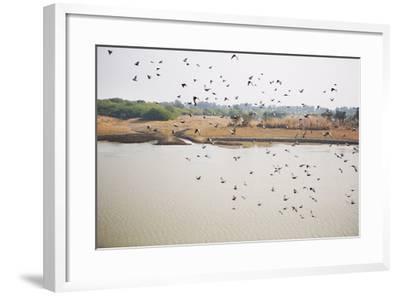 Birds I-Karyn Millet-Framed Photographic Print