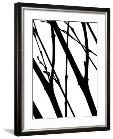 Branch Silhouette I-Monika Burkhart-Framed Photographic Print