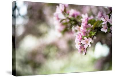 Spring Blossoms IV-Beth Wold-Stretched Canvas Print