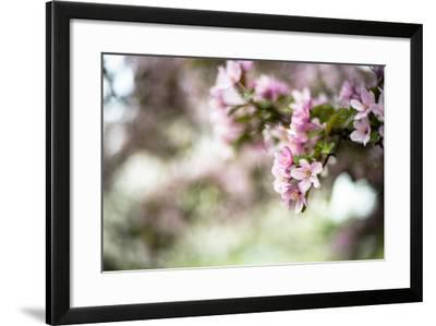 Spring Blossoms IV-Beth Wold-Framed Photographic Print