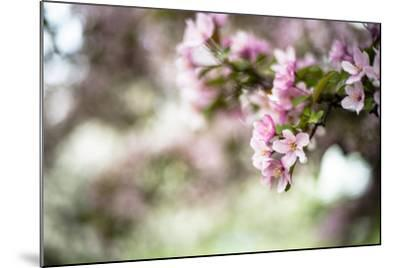 Spring Blossoms IV-Beth Wold-Mounted Photographic Print