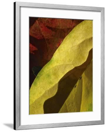 Fall Colors IV-Monika Burkhart-Framed Photographic Print