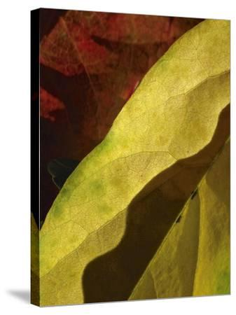 Fall Colors IV-Monika Burkhart-Stretched Canvas Print