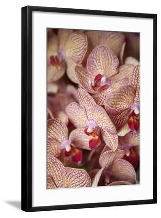 Orchid I-Karyn Millet-Framed Photographic Print