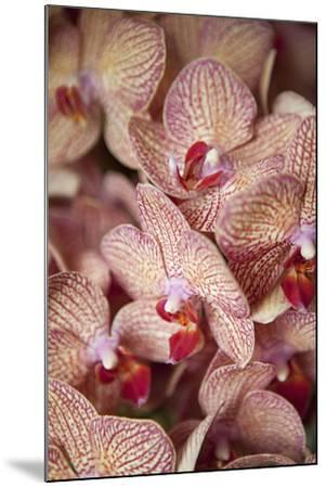 Orchid I-Karyn Millet-Mounted Photographic Print