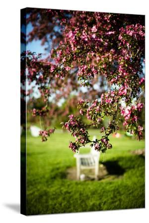 Spring Bench II-Beth Wold-Stretched Canvas Print