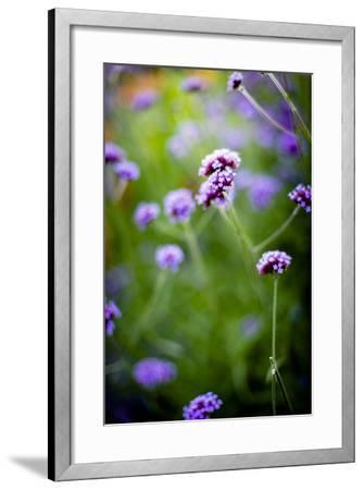 Purple Flowers-Beth Wold-Framed Photographic Print