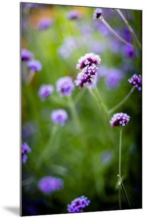 Purple Flowers-Beth Wold-Mounted Photographic Print