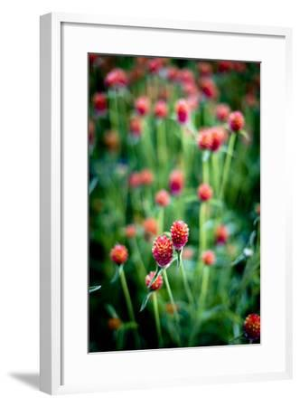 Red Flowers-Beth Wold-Framed Photographic Print