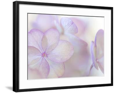 Pink Diamond III-Kathy Mahan-Framed Photographic Print