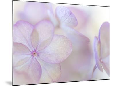 Pink Diamond III-Kathy Mahan-Mounted Photographic Print