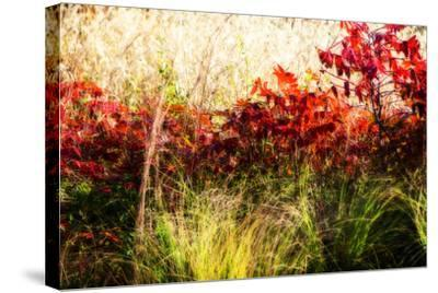 Color of Fall II-Alan Hausenflock-Stretched Canvas Print