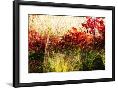Color of Fall II-Alan Hausenflock-Framed Photographic Print