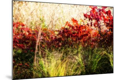 Color of Fall II-Alan Hausenflock-Mounted Photographic Print