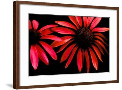 Red Echinacea-Ike Leahy-Framed Photographic Print