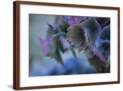 Autumn Hydrangea II-Rita Crane-Framed Photographic Print