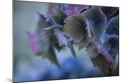 Autumn Hydrangea II-Rita Crane-Mounted Photographic Print