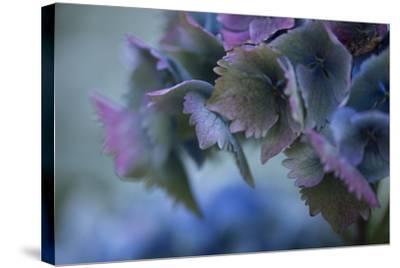 Autumn Hydrangea II-Rita Crane-Stretched Canvas Print