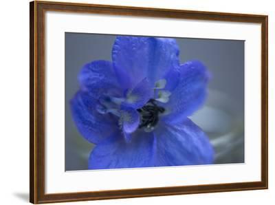 Delphinium Flower I-Rita Crane-Framed Photographic Print
