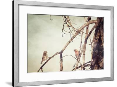 The Courtship-Roberta Murray-Framed Photographic Print