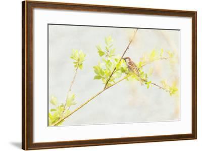P Dometicus-Roberta Murray-Framed Photographic Print