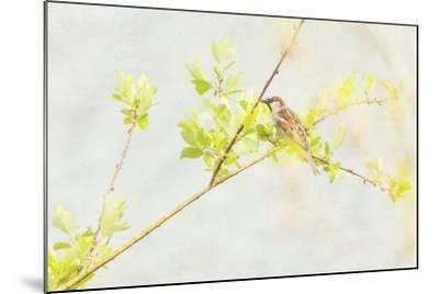 P Dometicus-Roberta Murray-Mounted Photographic Print