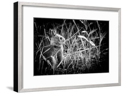 Baby Bunny II-Beth Wold-Framed Photographic Print