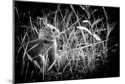 Baby Bunny II-Beth Wold-Mounted Photographic Print