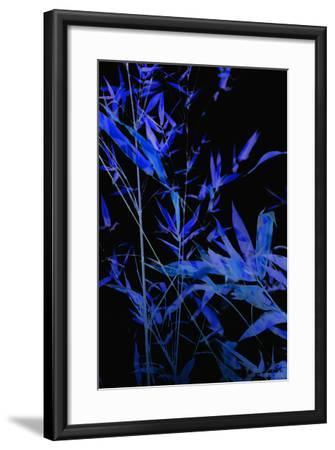 Bamboo at Night II-Karyn Millet-Framed Photographic Print