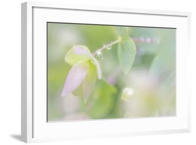 Dew Covered Oregano III-Kathy Mahan-Framed Photographic Print