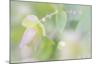 Dew Covered Oregano III-Kathy Mahan-Mounted Photographic Print