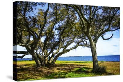 Live Oaks by the Bay I-Alan Hausenflock-Stretched Canvas Print
