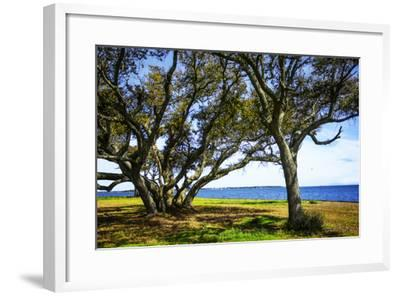Live Oaks by the Bay I-Alan Hausenflock-Framed Photographic Print