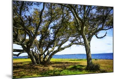 Live Oaks by the Bay I-Alan Hausenflock-Mounted Photographic Print