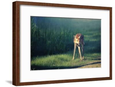 Bambi-Roberta Murray-Framed Photographic Print