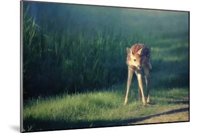 Bambi-Roberta Murray-Mounted Photographic Print