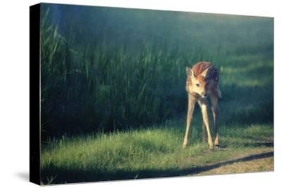 Bambi-Roberta Murray-Stretched Canvas Print