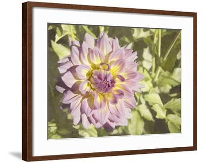 Garden Dahlias II-George Johnson-Framed Photographic Print