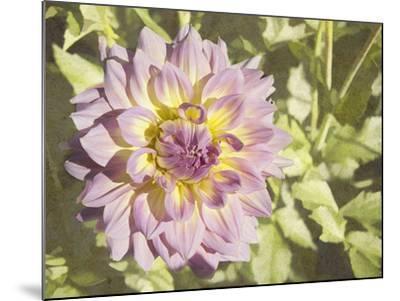 Garden Dahlias II-George Johnson-Mounted Photographic Print