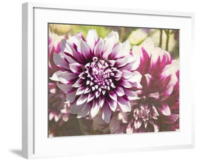Garden Dahlias III-George Johnson-Framed Photographic Print