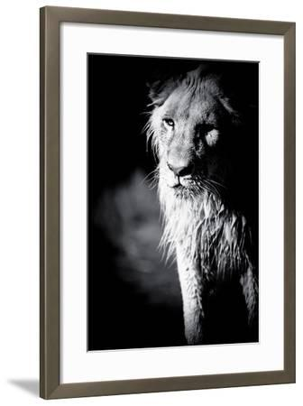 Lioness in Water II-Beth Wold-Framed Photographic Print