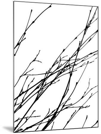Dancing Branches IV-Monika Burkhart-Mounted Photographic Print