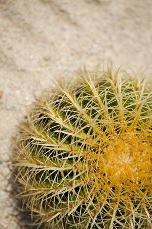 Cactus-Karyn Millet-Framed Photographic Print