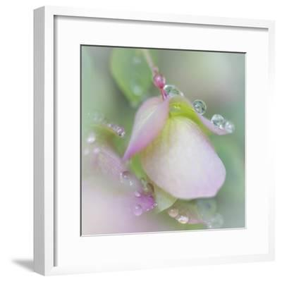 Dew Covered Oregano II-Kathy Mahan-Framed Photographic Print