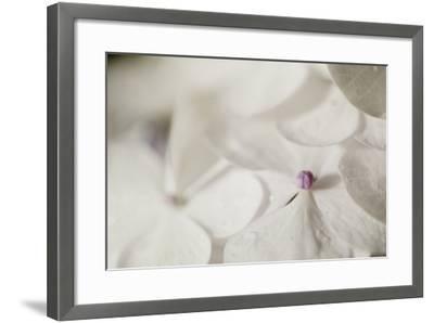 Raindrops on Petals-Roberta Murray-Framed Photographic Print