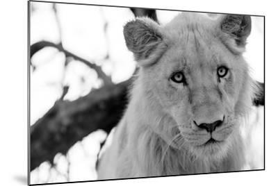 Male Lion-Beth Wold-Mounted Photographic Print