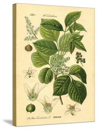 Botanical II-N^ Harbick-Stretched Canvas Print