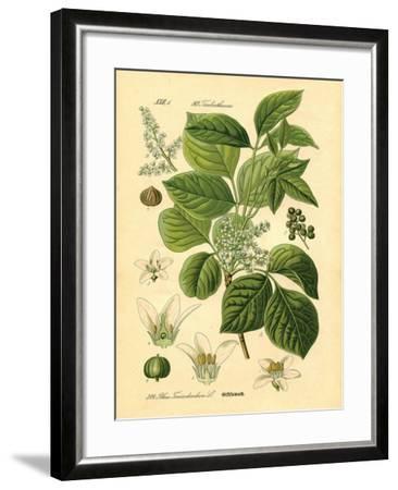 Botanical II-N^ Harbick-Framed Art Print