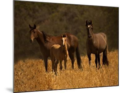 Mustang Family-Sally Linden-Mounted Photographic Print