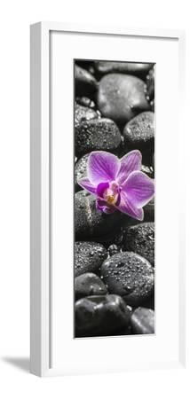Orchid Blossom on Black Stones-Uwe Merkel-Framed Photographic Print